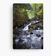 Algonquin Park, Northern Ontario Canvas Print