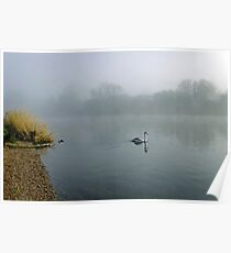 A Cygnet in the Fog Poster