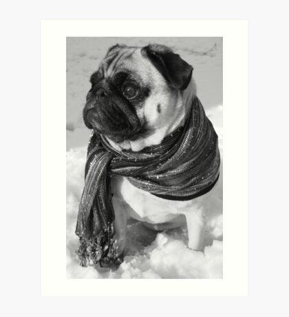 Snow Pug Art Print