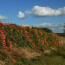 vines on SR 42, Oklawaha, Florida by Margaret Shark