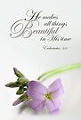 He Makes All Things Beautiful (Card) by Tracy Friesen