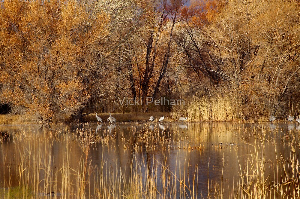 Autumn Relections by Vicki Pelham
