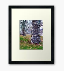Trees Planted by the River Framed Print