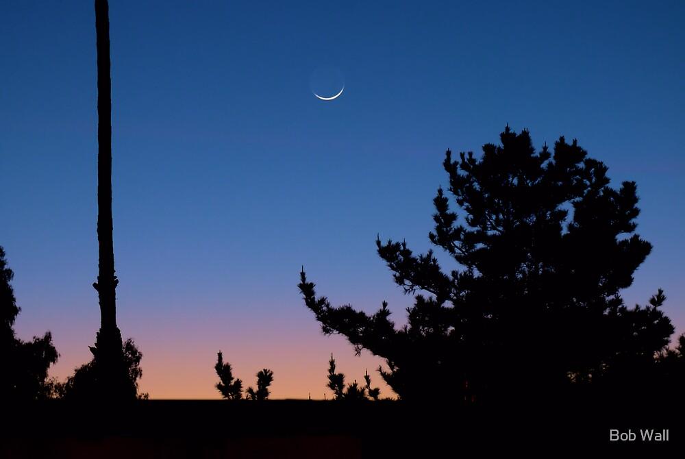 And the moon follows the sun by Bob Wall