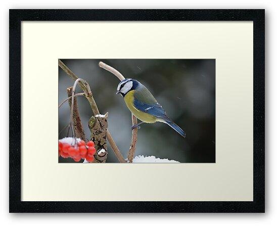Blue tit in winter by Peter Wiggerman