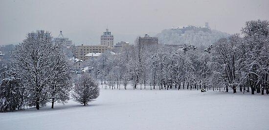 Snowy white by Katarina Kuhar
