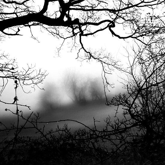 Trees Frame Trees by EdPettitt