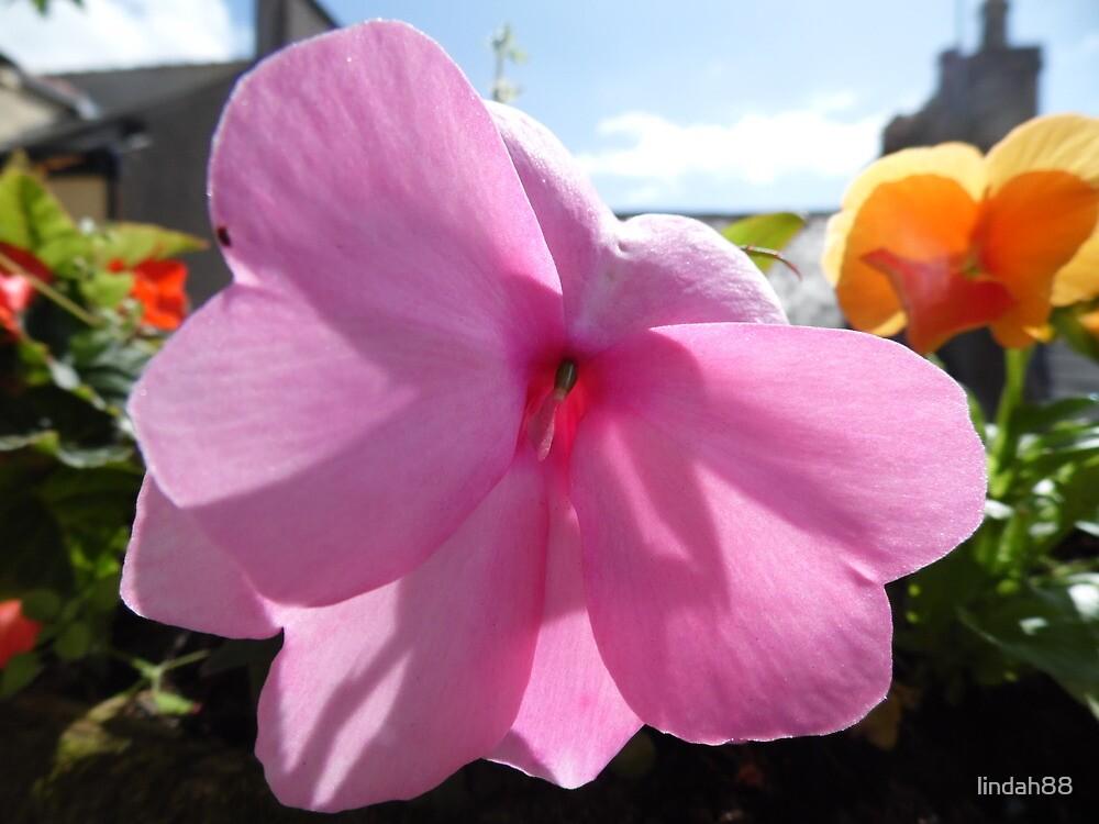 Flower Up Close  by lindah88