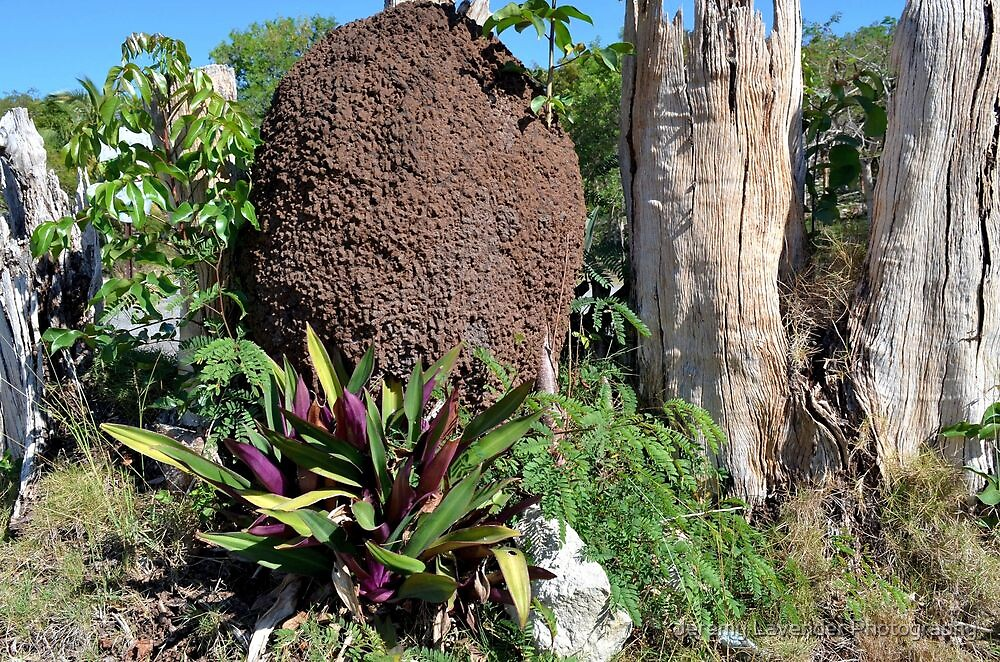 Termite Nest in Nassau, The Bahamas by Jeremy Lavender Photography