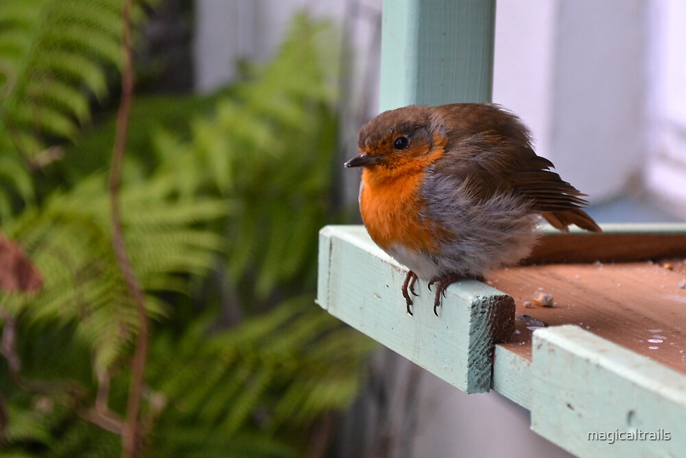Baby Robin on Bird Table by magicaltrails