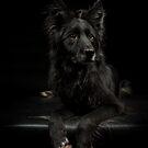 Black on Black on Black by Mark Cooper
