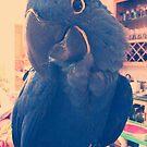 Abby The Macaw  by SunShineInMySky