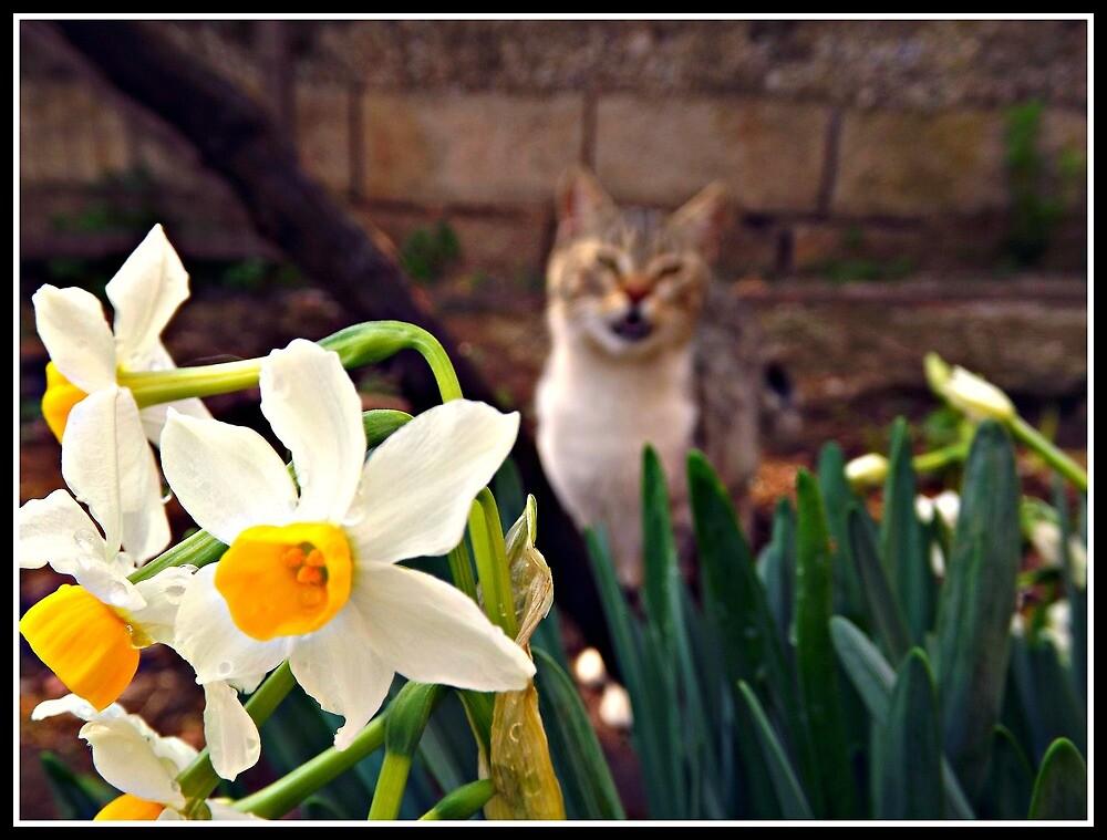 flower cat by thanosgreece