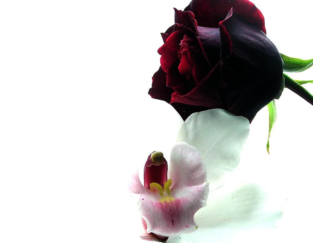 rosa y orquidea by botticceli