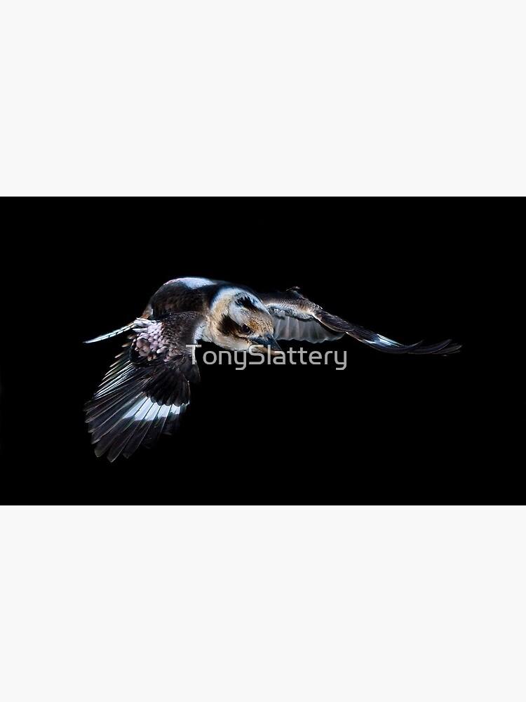 Flying Kookaburra by TonySlattery