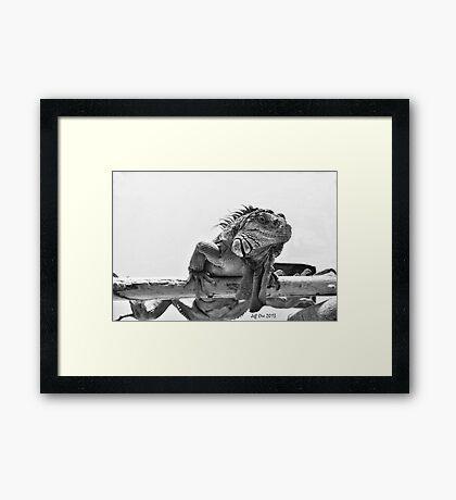 Black&White Iguana Framed Print