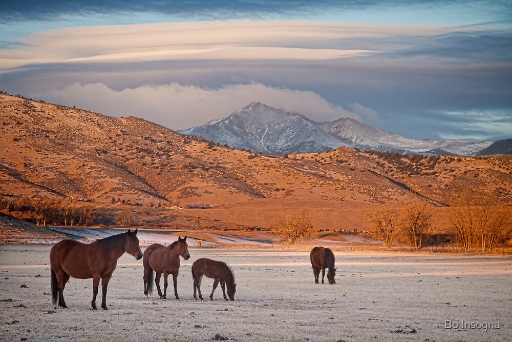 Rocky Mountain Country Morning by Bo Insogna
