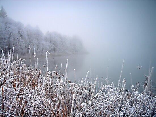 Misty ... by globeboater
