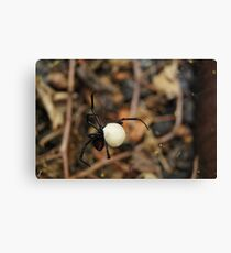 Black Widow Spider Mother Canvas Print