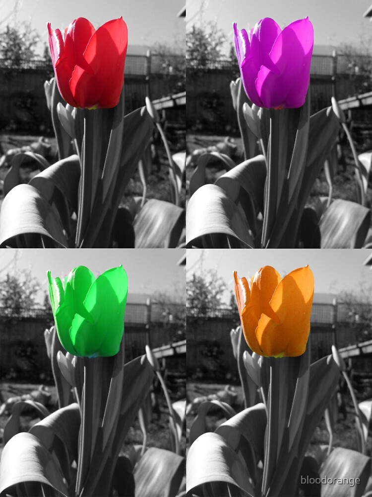 multi-coloured tulips by bloodorange