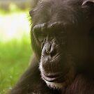 Smiling Chimpanzee by xomoosexo