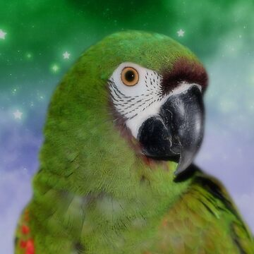 Green Severe Mini Macaw Parrot by SmilinEyes
