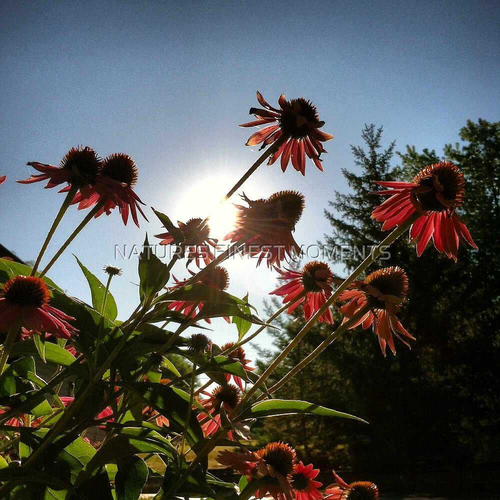 Sun and flowers by NATURES FINEST MOMENTS
