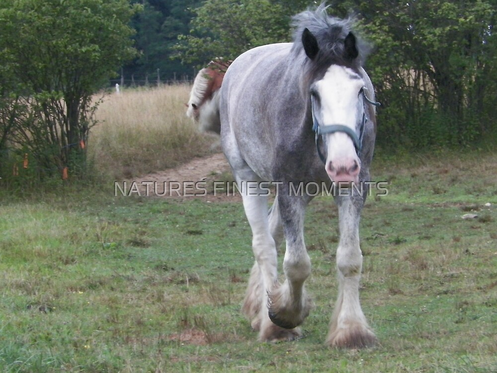 Horse by NATURES FINEST MOMENTS