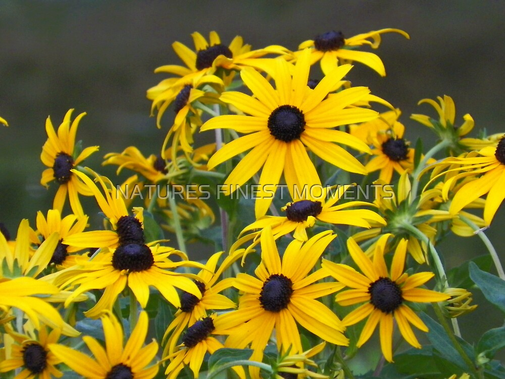 Flowers by NATURES FINEST MOMENTS