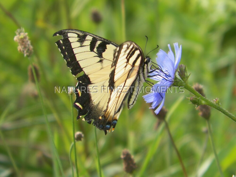 Butterfly by NATURES FINEST MOMENTS