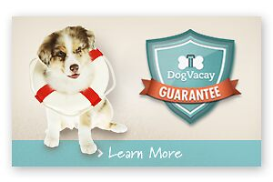 Pet Sitting Los Angeles by artificialgrass