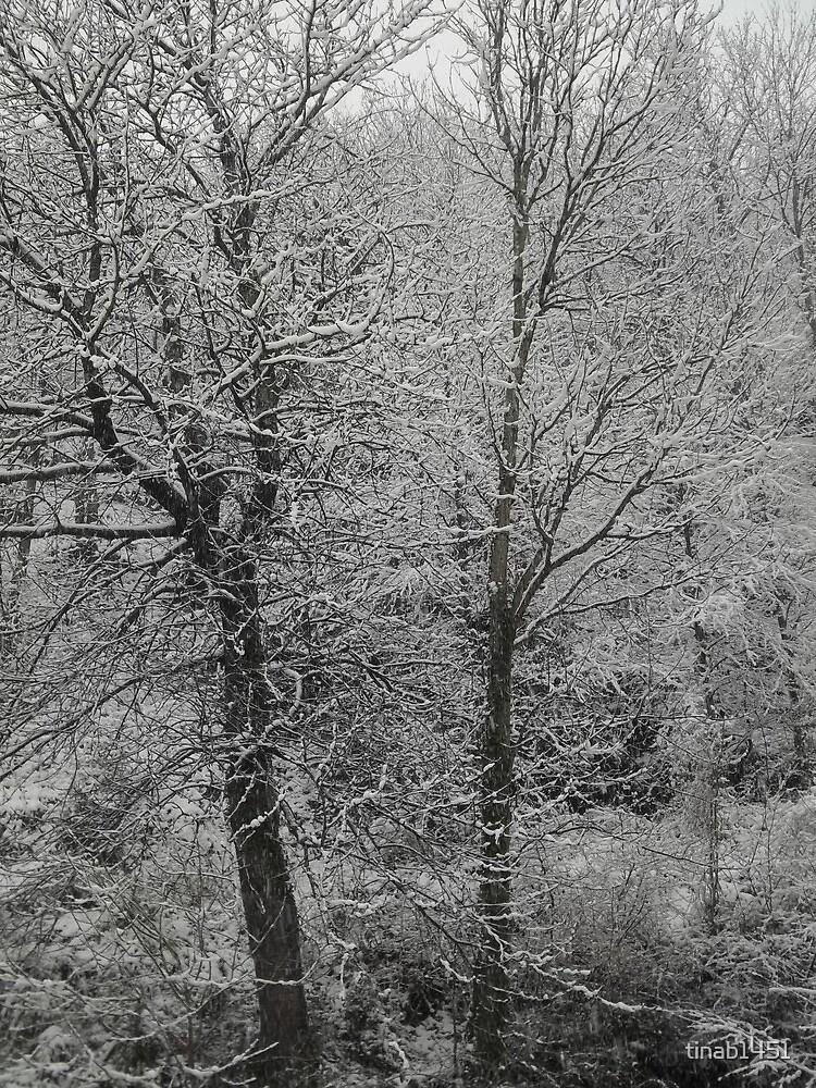 Winter scene by tinab1451