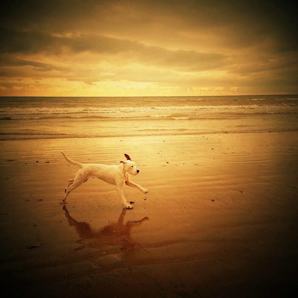 running dog by mayamai