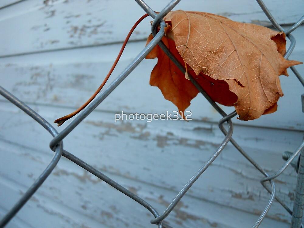 Falling Leaf by photogeek312