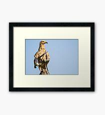 Egyptian Vulture Boromir Framed Print