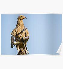 Egyptian Vulture Boromir Poster