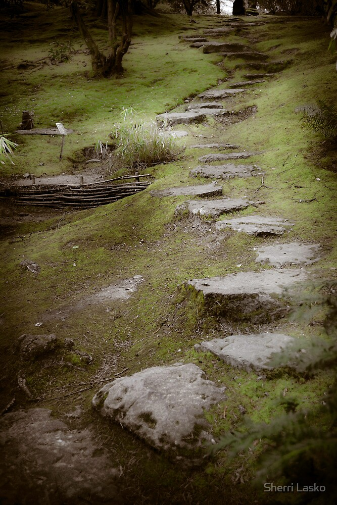 Pathway by Sherri Lasko