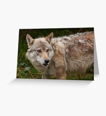 Wolf with beautiful eyes Greeting Card