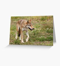 Wolf walking Greeting Card