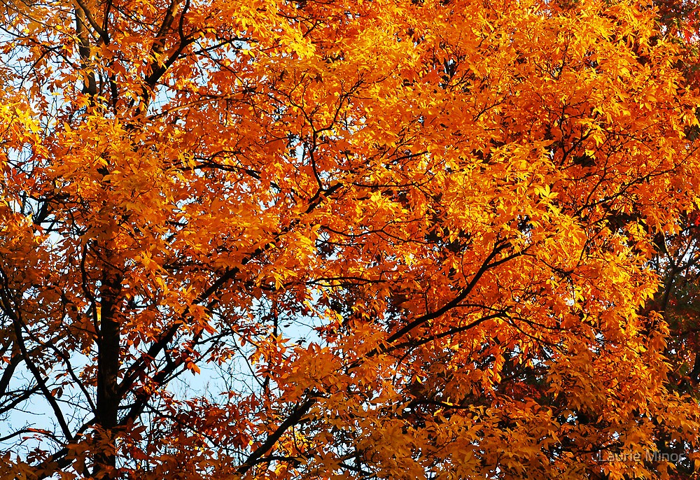 Autumn Leaves At Their Peak by Laurie Minor
