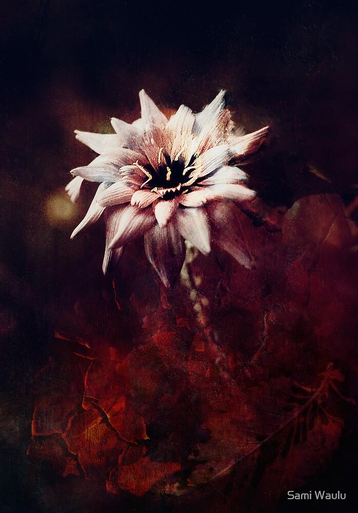 Star in the Dark by Sami Waulu