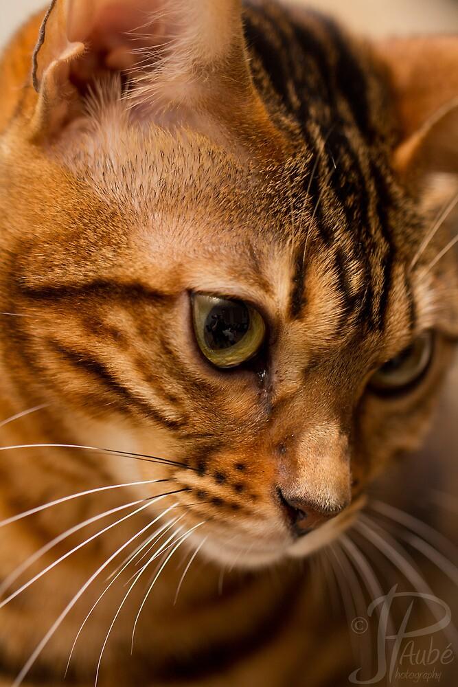 Camo Bengal Cat by JPAube