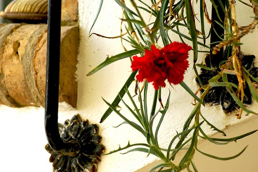 clavel by botticceli