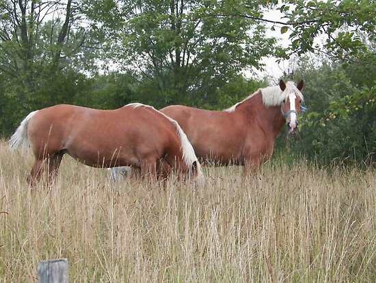 Horses  by NATURES FINEST MOMENTS