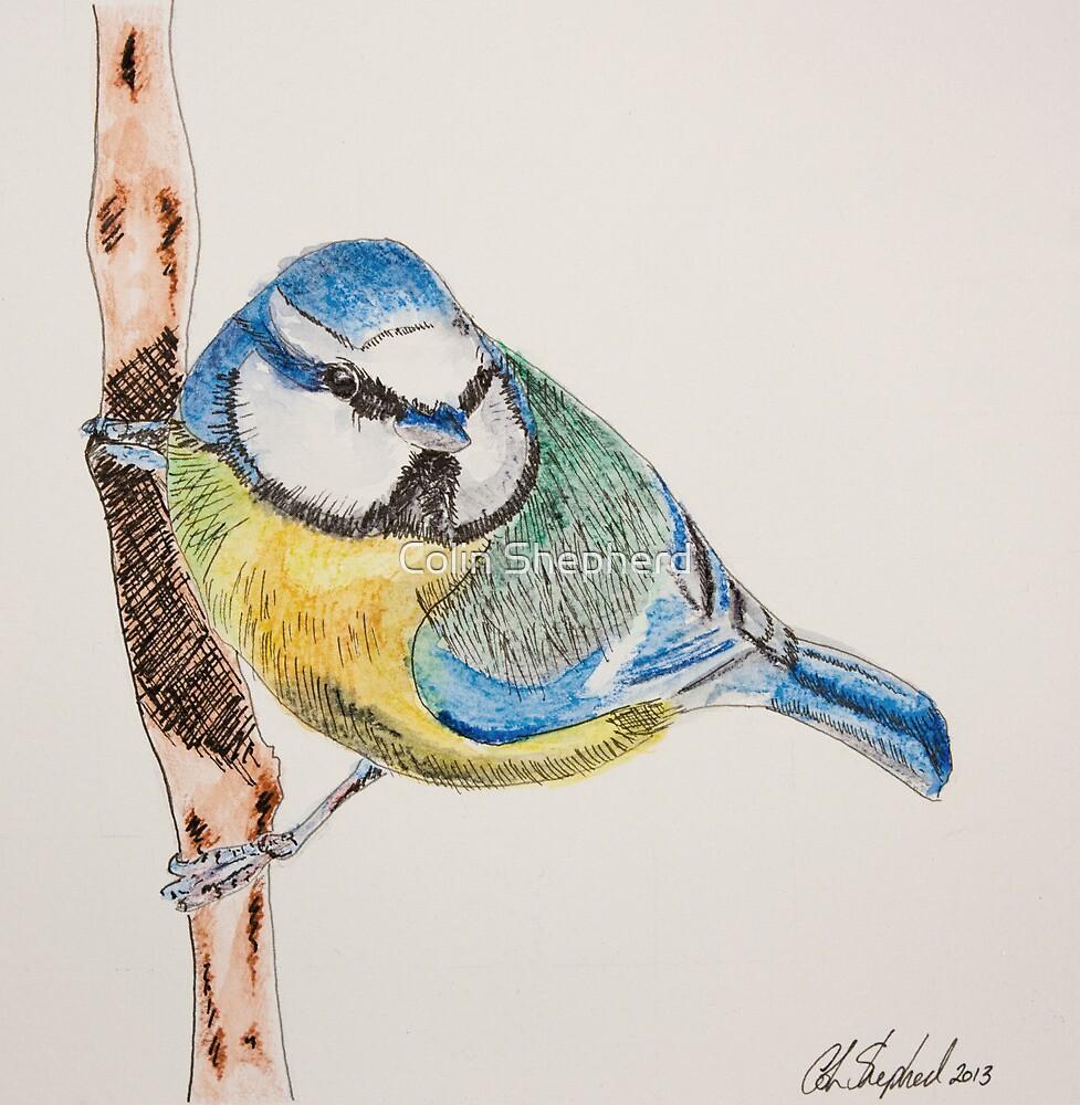 Blue Tit by Colin Shepherd