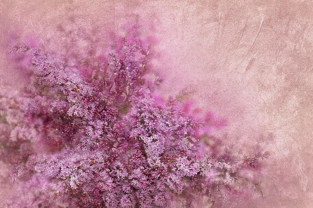 Lilac Splash by Svetlana Sewell