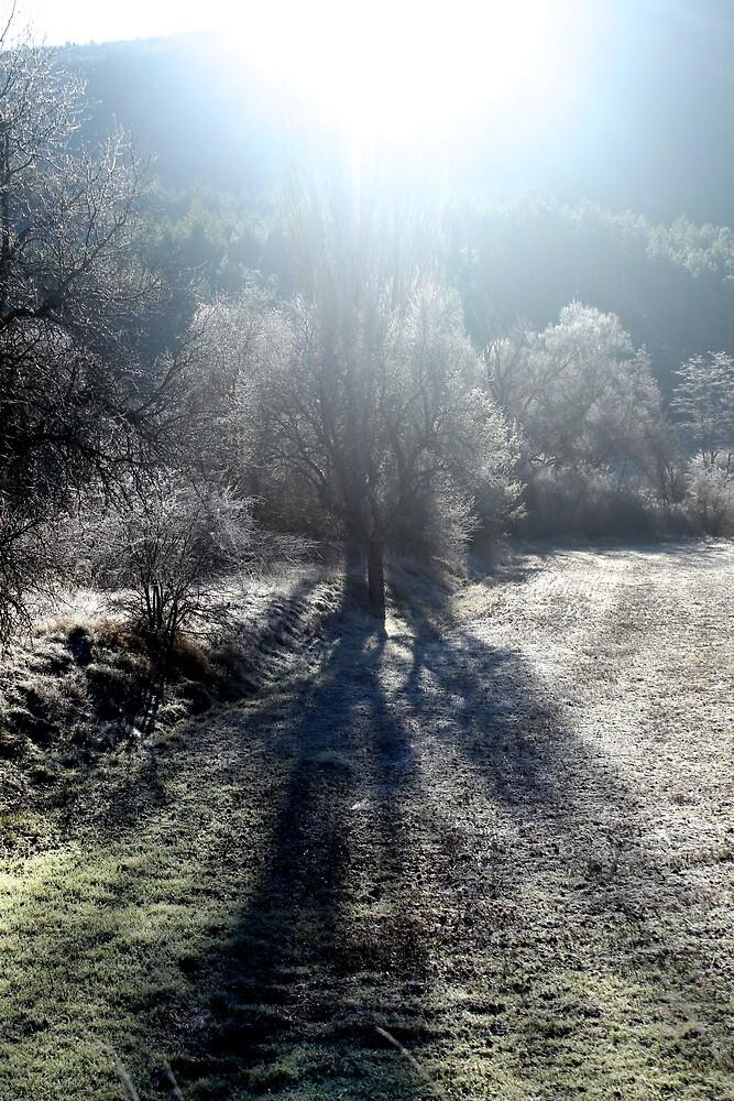 Frost by redwerm