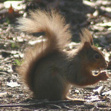 Red Squirrel by Coemlyn