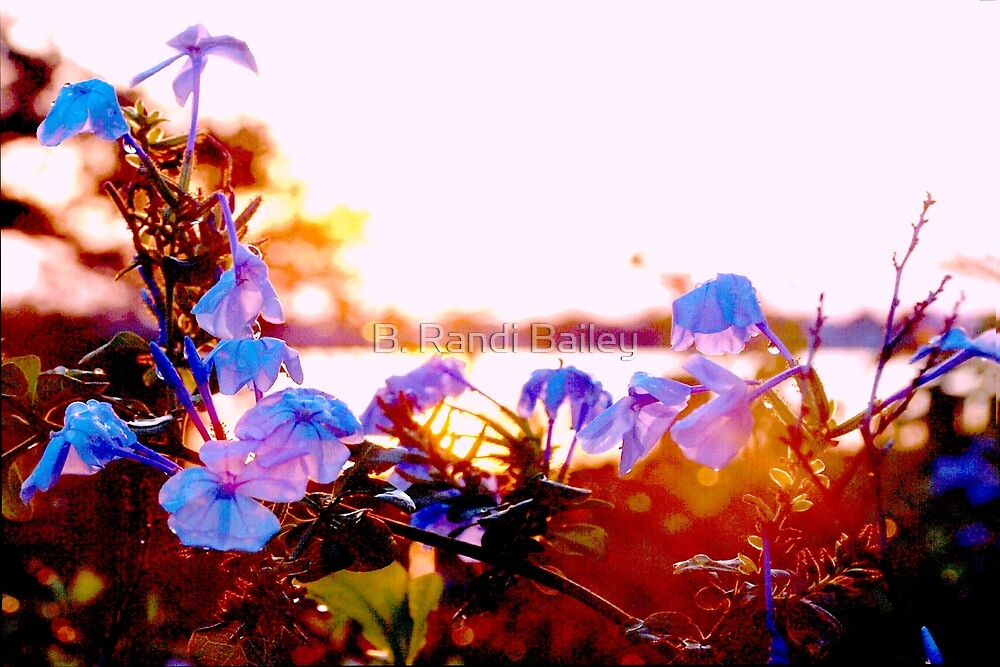 Drenched plumbago flowers by ♥⊱ B. Randi Bailey