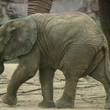 Baby Elephant by Coemlyn